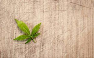 Na co pomaga lecznicza marihuana?
